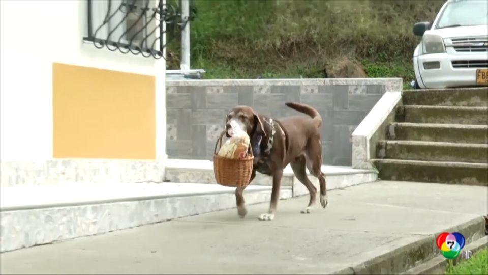 สุนัขแสนรู้ส่งของในโคลอมเบีย
