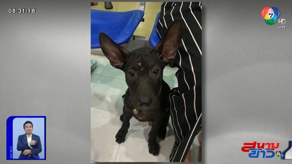 ภาพเป็นข่าว : สุนัขแสนรู้ หลงทางจำบ้านไม่ได้ แต่จำคลินิคได้