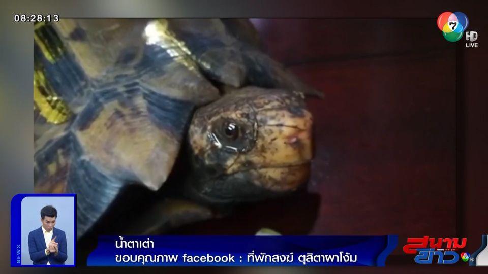 ภาพเป็นข่าว : น่าสงสาร ชาวบ้านเตรียมนำเต่าไปปล่อย พบว่าน้ำตาไหล