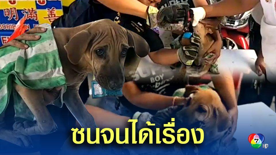 ลูกสุนัขวัย 4 เดือน เล่นซุกซนจนปากติดกระป๋องกาว