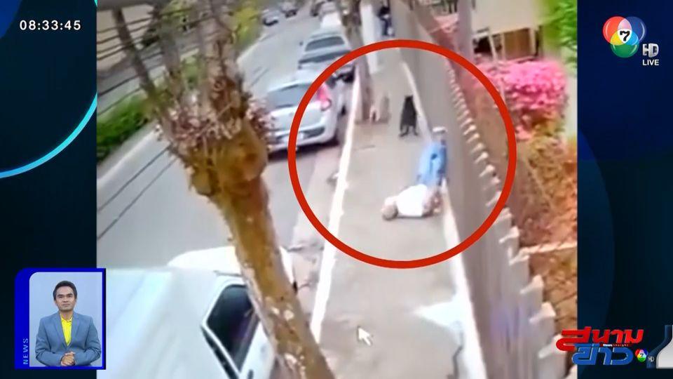 ภาพเป็นข่าว : เผยคลิปสุนัขวิ่งชนชายสูงวัย เสียหลักล้มกระแทกพื้นอย่างแรง
