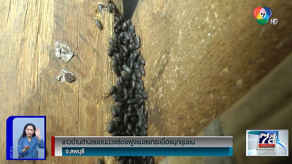 ชาวบ้าน ต.ชอนม่วง จ.ลพบุรี ร้องฝูงแมลงกระเบื้องบุกหมู่บ้าน วอนหน่วยงานช่วยเหลือ