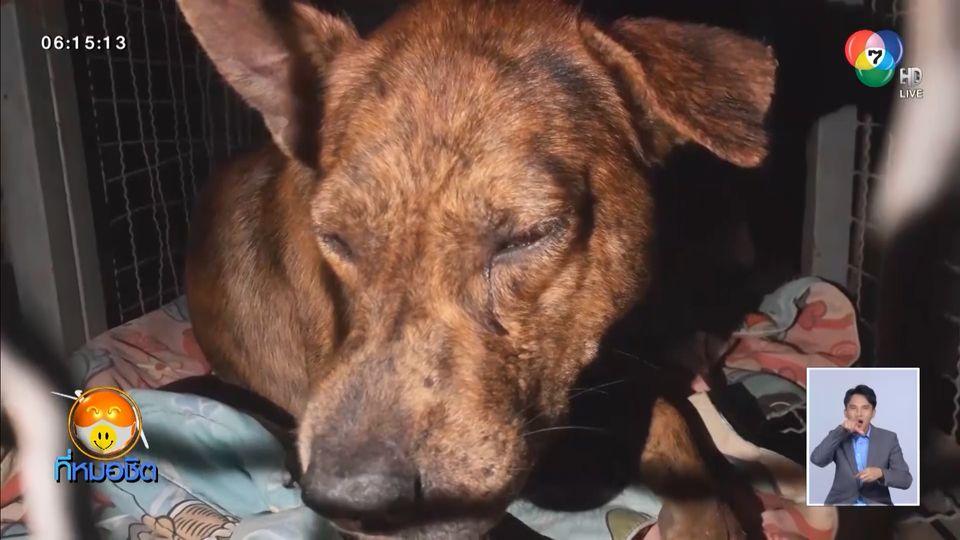 แจ้งจับเพื่อนบ้าน ยิงหัวสุนัขเลือดอาบ จับทรมานมัดลวดผูกติดเสาไฟฟ้า
