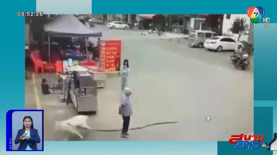 ภาพเป็นข่าว : อุทาหรณ์สายจูงหมา ทำคุณตาล้มหัวกระแทกพื้น เสียชีวิต