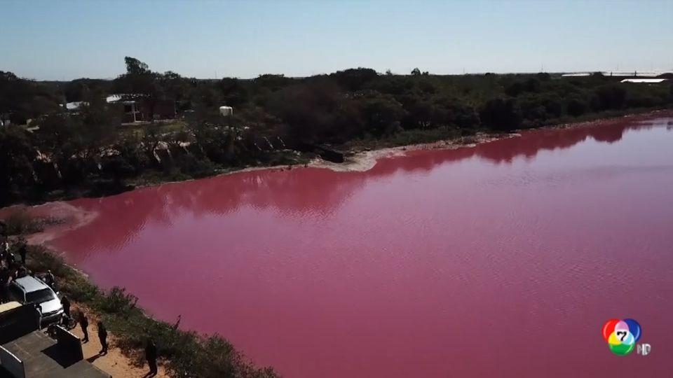 โรงงานฟอกหนังทำหนองน้ำเปลี่ยนสี ในปารากวัย