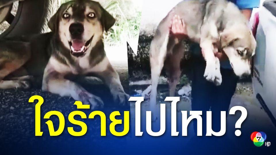 วอนช่วยสุนัขถูกทำร้าย ตัดหาง-ทุบหัว