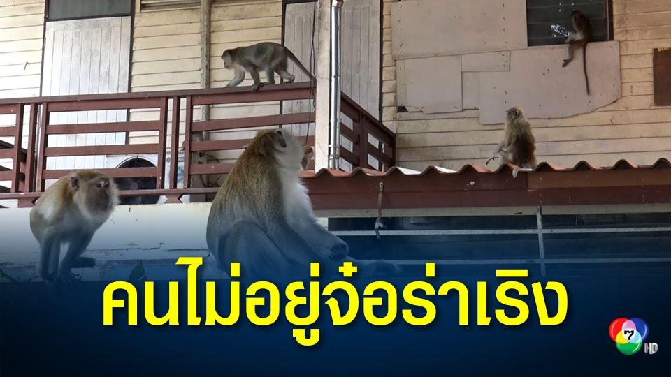 วันหยุดยาว เจ้าของบ้านไม่อยู่ไปเที่ยวกันหมด ลิงเขาตังกวนเข้าไปอาศัยในบ้านทั้งฝูง