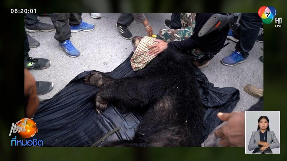 นาทีระทึก กระหน่ำยิงยาสลบ ล้อมจับ หมีควาย สำเร็จ