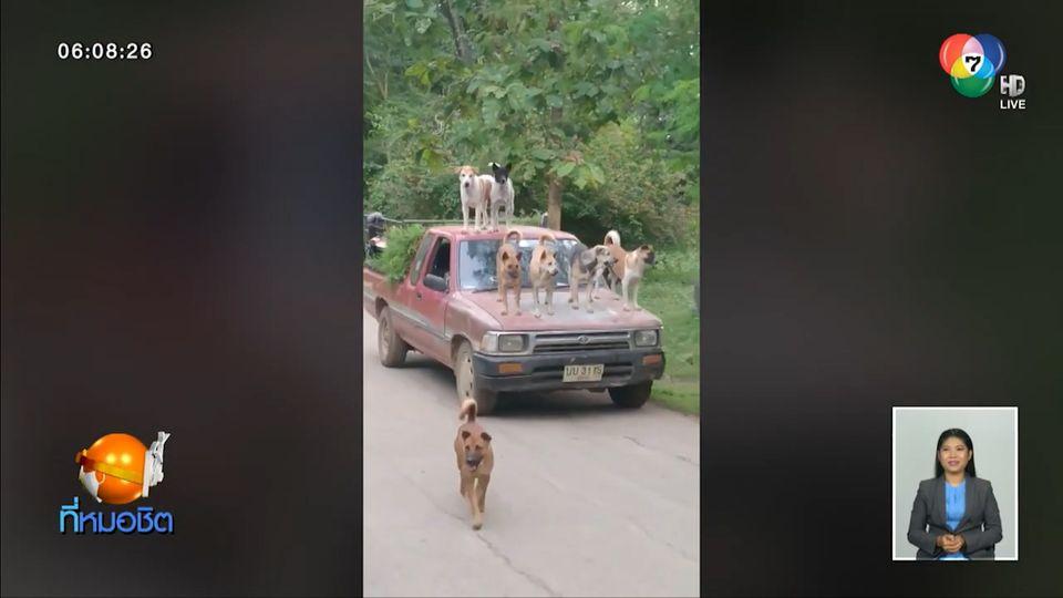 แห่แชร์ภาพน่ารัก แก๊งสุนัขยืนบนหลังคา-กระโปรงหน้ารถกระบะ