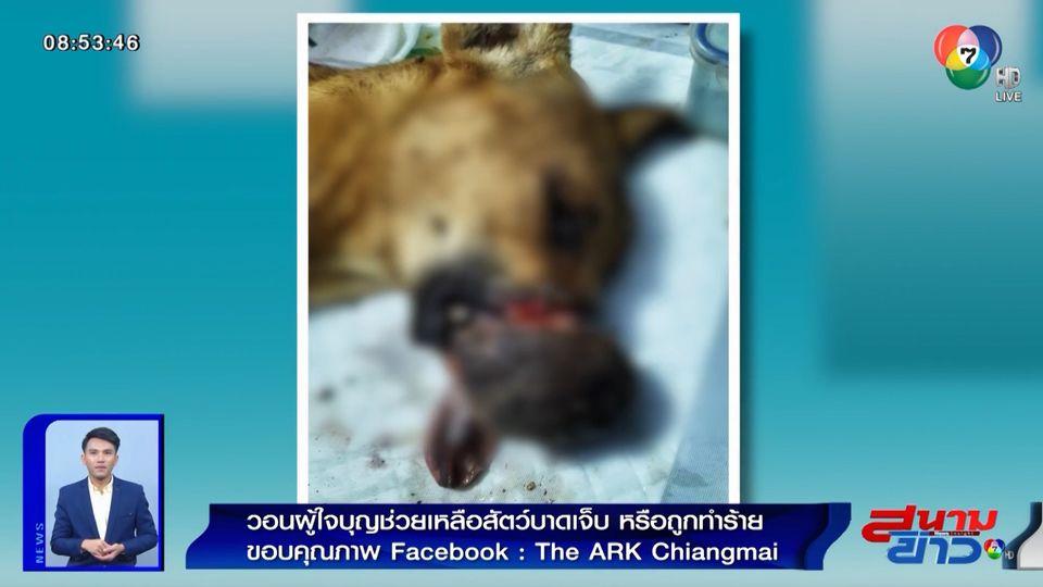 ภาพเป็นข่าว : วอนผู้ใจบุญช่วยเหลือสัตว์บาดเจ็บ หรือถูกทำร้าย