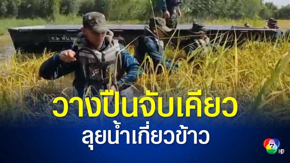 ทหารบกยกพลช่วยชาวนาเกี่ยวข้าวหนีน้ำ
