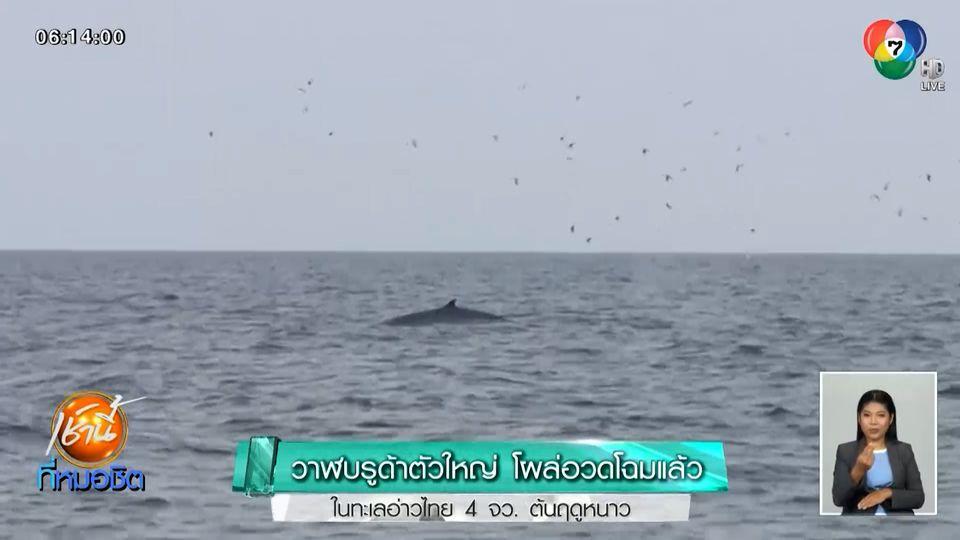 วาฬบรูด้าตัวใหญ่ โผล่อวดโฉมแล้ว ในทะเลอ่าวไทย 4 จว.ต้นฤดูหนาว