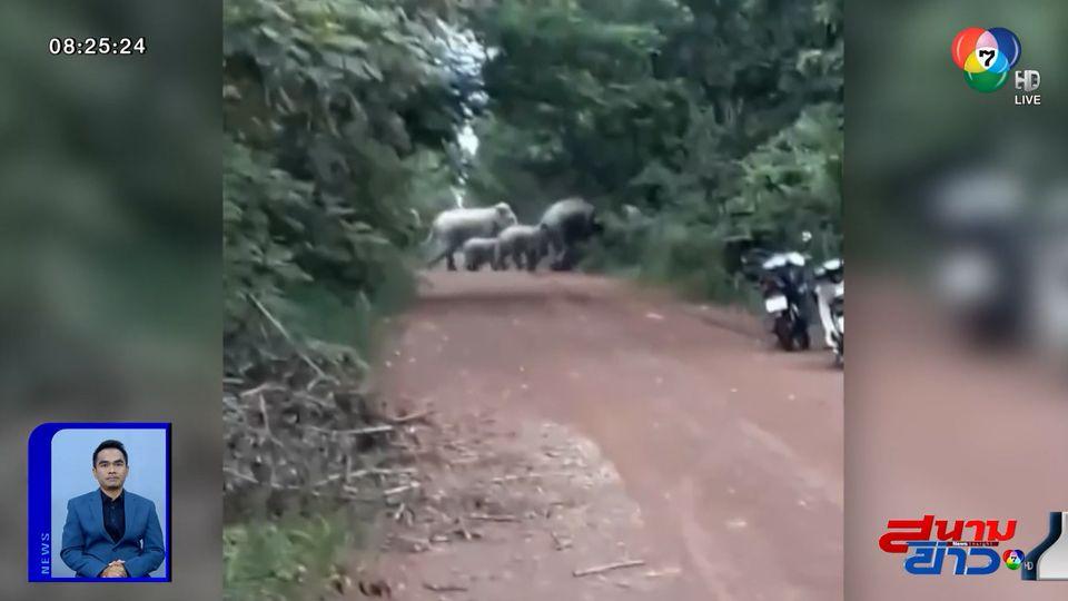 รายงานพิเศษ : ผวาช้างป่าตกมัน ทำร้ายคนงานกรีดยางเสียชีวิต จ.ชลบุรี