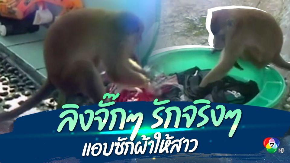ลิงป่าแสนรู้ แอบซักผ้าให้สาวอินโดนีเซีย