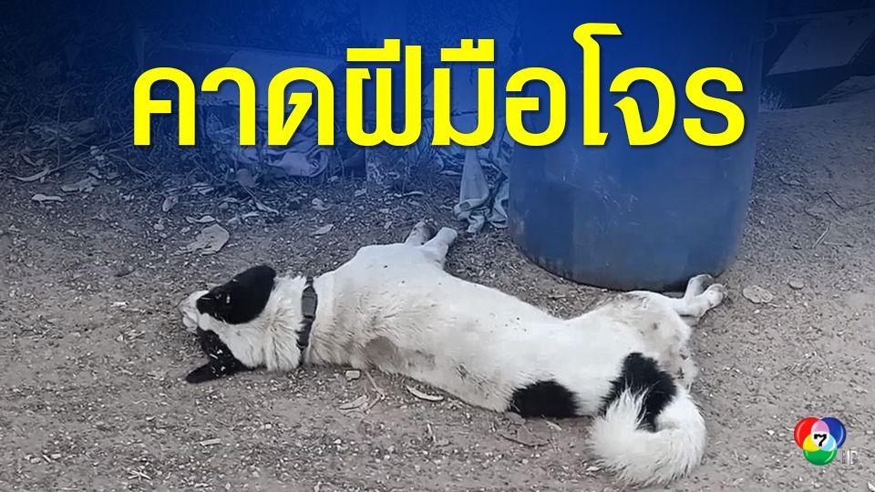 วางยาเบื่อสุนัข แมว และนกเอี้ยงที่มาจิกกินอาหาร ตายหมด 6 ตัว ชาวบ้านคาดเป็นฝีมือโจรงัดบ้าน