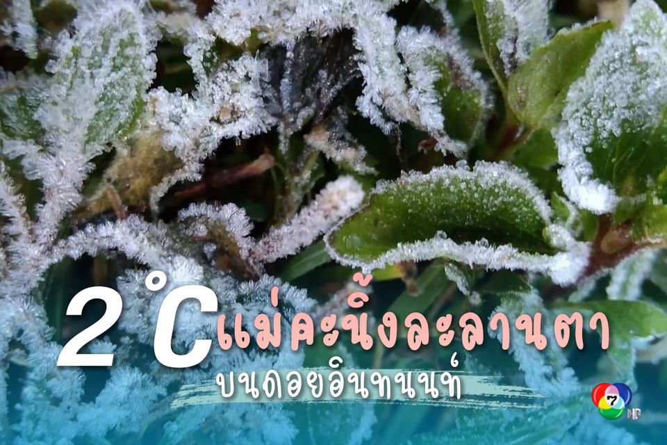 ไม่ผิดหวัง! ดอยอินทนนท์หนาวจัด อุณหภูมิ 2 องศา เกิดแม่คะนิ้งติดกันเป็นวันที่ 2