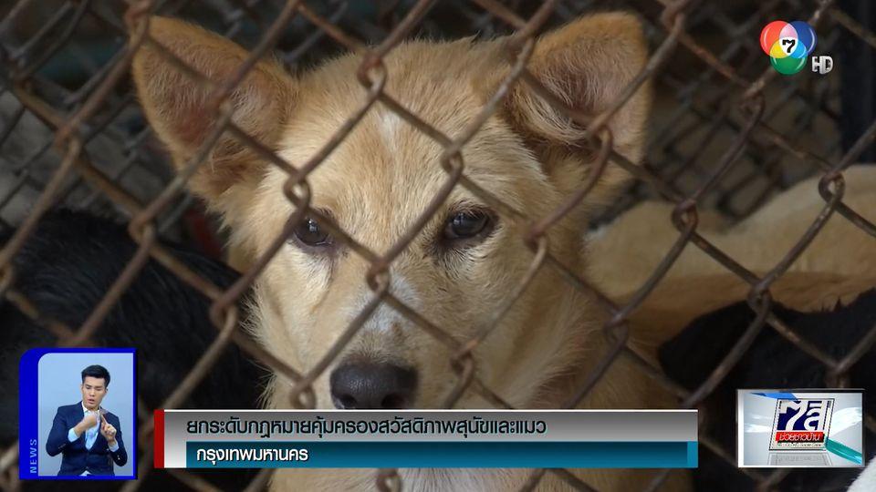 ยกระดับกฎหมายคุ้มครองสวัสดิภาพสุนัขและแมว มีโทษทั้งจำทั้งปรับ
