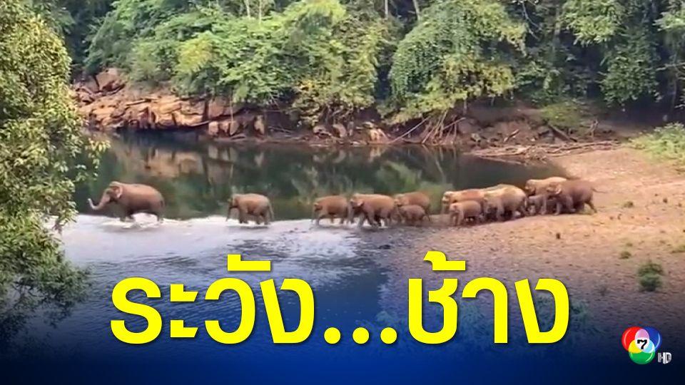 อุทยานแห่งชาติทองผาภูมิเตือนระวังขับรถชนช้าง หลังโขลงช้างป่าโผล่กว่า 40 ตัว!