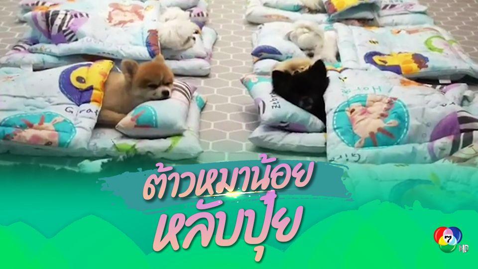 ศูนย์ดูแลสุนัขเกาหลีใต้ ฝึกแก๊งน้องหมานอนหลับในถุงนอน