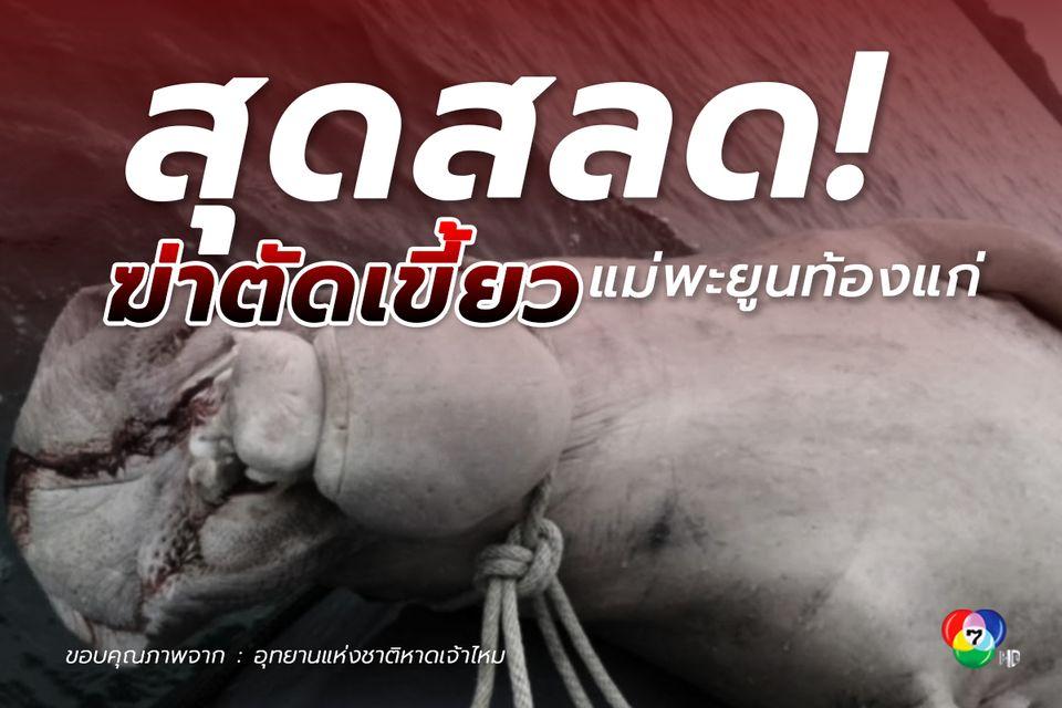 สุดสลดก่อนสิ้นปี! พบพะยูนท้องแก่ถูกฆ่าตัดเขี้ยว ลอยตายในทะเลตรัง