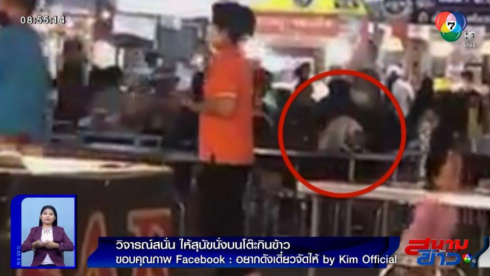 ภาพเป็นข่าว : วิจารณ์สนั่น! เจ้าของเอาสุนัขนั่งบนโต๊ะกินข้าวในที่สาธารณะ