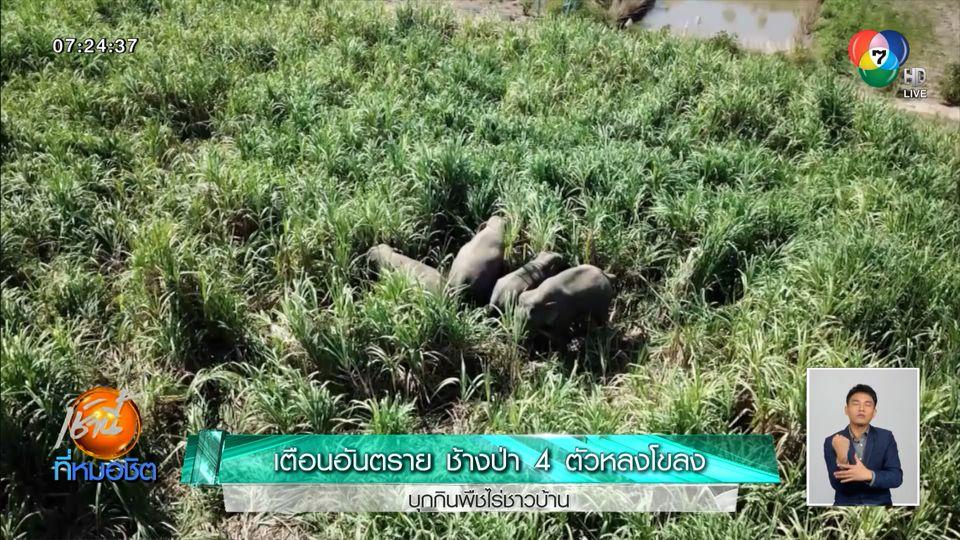 เตือนอันตราย ช้างป่า 4 ตัวหลงโขลง บุกกินพืชไร่ชาวบ้าน