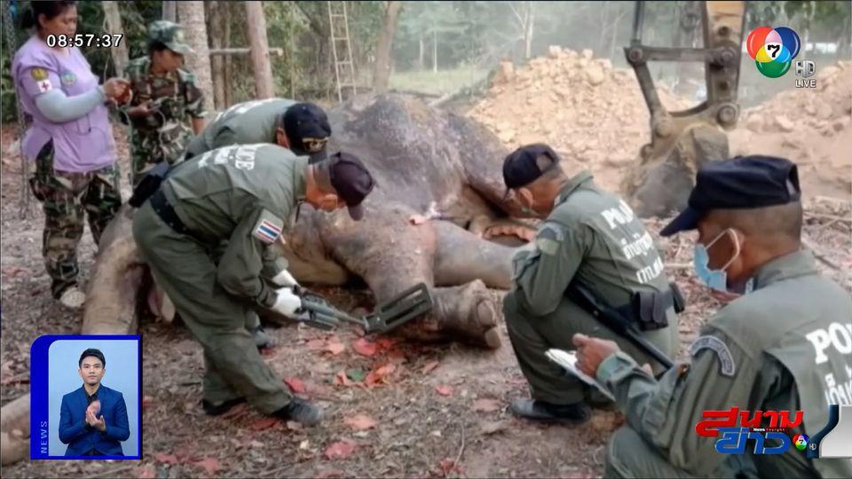 ภาพเป็นข่าว : สุดยื้อชีวิต ช้างป่ากุยบุรี ชันสูตรพบกระสุนฝังอยู่ทั่วร่าง