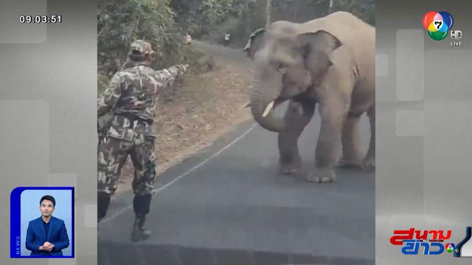 ภาพเป็นข่าว : ช้างป่าเขาใหญ่หยุด หยุดโดยมีเจ้าหน้าที่กั้น