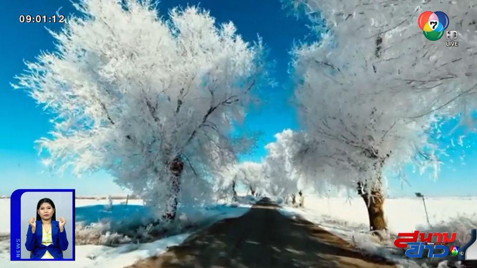ภาพเป็นข่าว : หนาวแต่งดงาม! ต้นไม้เป็นน้ำแข็งในสเปน