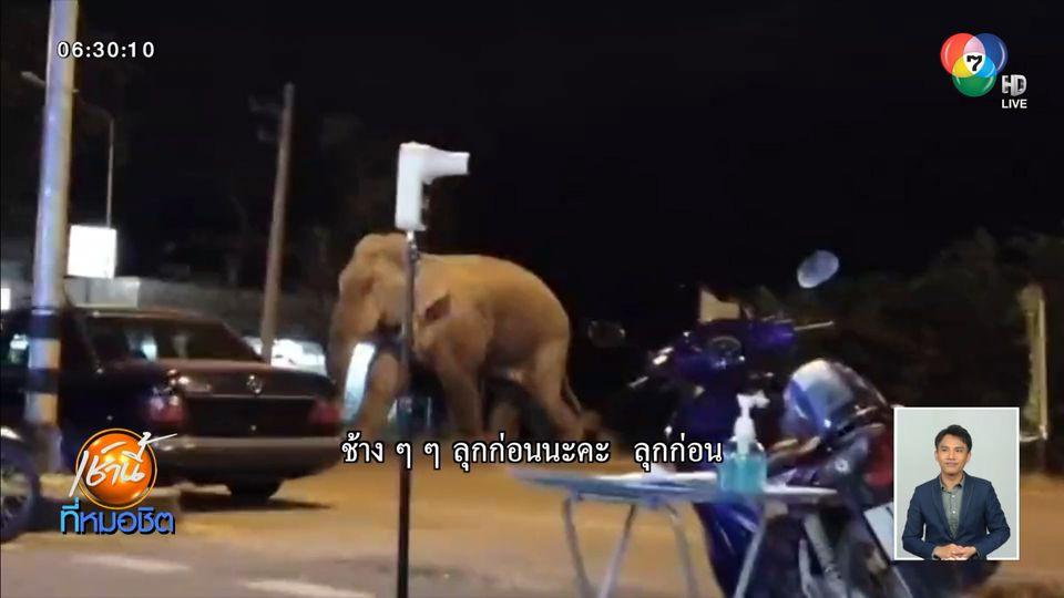 แตกตื่นทั้งร้าน ช้างป่าอยากกินหมูกระทะ แต่สุดท้ายเปลี่ยนใจ