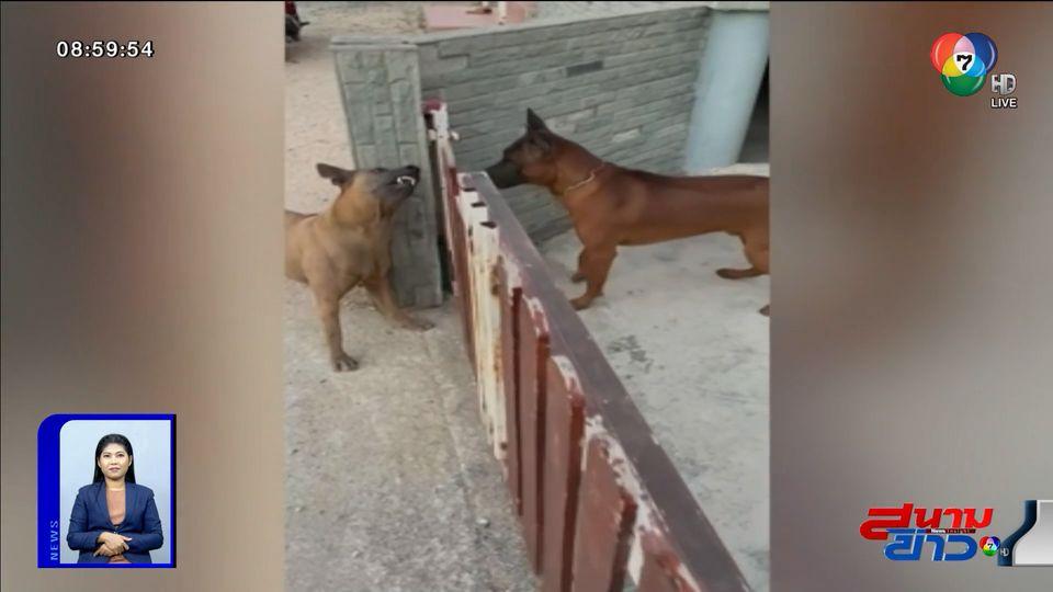 ภาพเป็นข่าว : เก่งแค่ตอนมีรั้วกั้น จากสุนัขโหดกลายเป็นสุนัขเชื่อง
