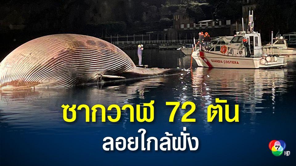 อิตาลีเก็บกู้ซากวาฬ 72 ตัน ลอยตายใกล้ชายฝั่ง