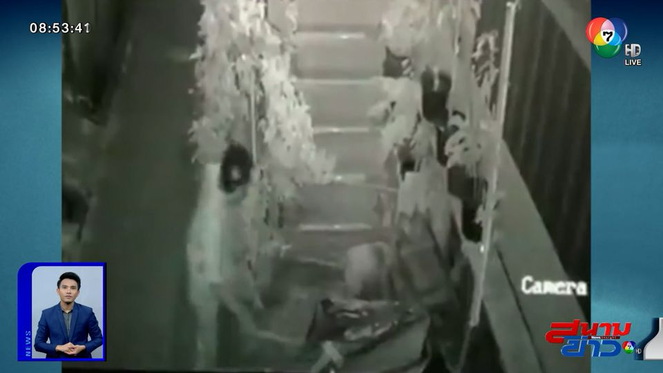 ภาพเป็นข่าว : ตามหาชายโหด ตีสุนัขตาบอดจนตาย