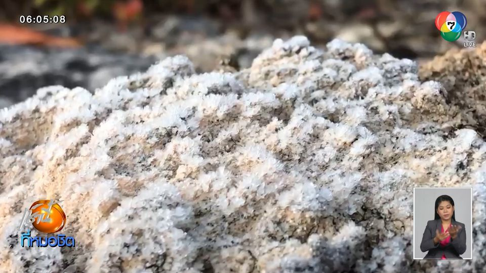 ดอยอินทนนท์หนาว เกิดเหมยขาบขาวโพลน ชวนชมดอกกุหลาบพันปีบานสะพรั่ง