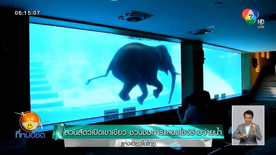 สวนสัตว์เปิดเขาเขียว ชวนชมการแสดงโชว์ช้างว่ายน้ำแห่งเดียวในไทย