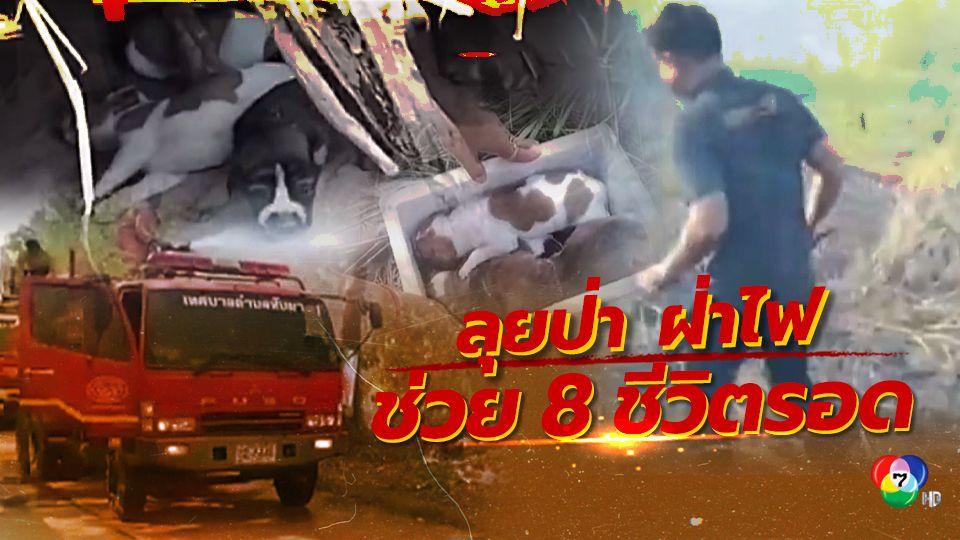 จิตอาสาลุยป่าฝ่าไฟไหม้หญ้าช่วยลูกสุนัข 8 ชีวิต รอดหวุดหวิด