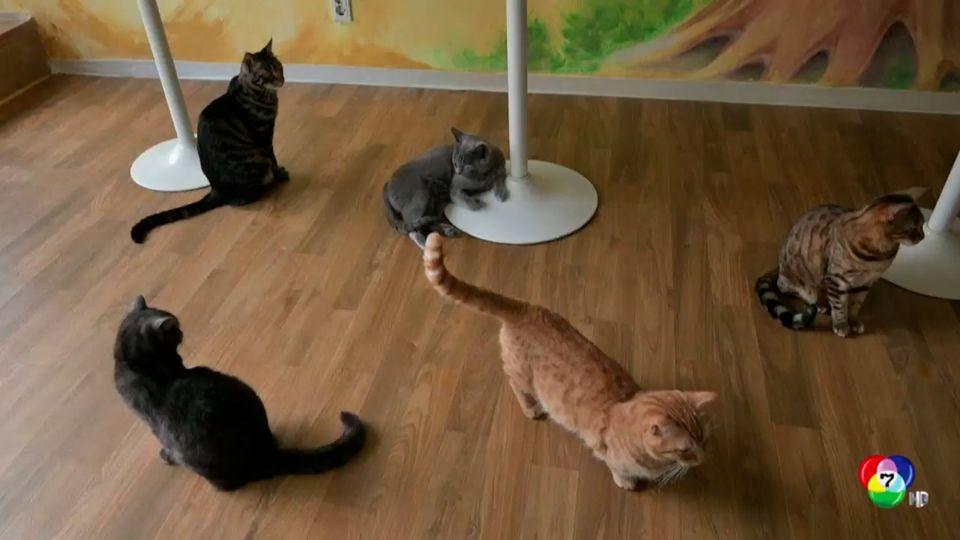 เกาหลีใต้เตรียมตรวจหาเชื้อโควิด-19 ให้สัตว์เลี้ยง หลังพบแมวติดเชื้อตัวแรก