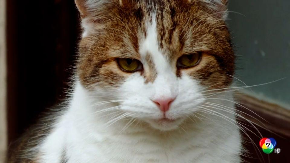 ครบรอบ 10 ปี แมวผู้พิทักษ์บ้านนายกรัฐมนตรีอังกฤษ