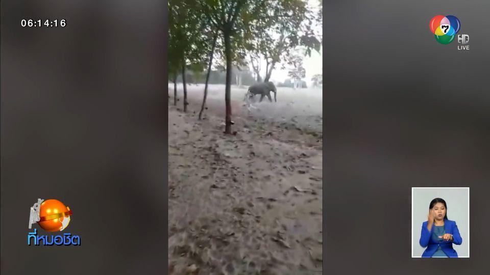 ชาวบ้านผวา ช้างป่าเจ้าอ้อน ตกมัน เดินวนเวียนใกล้บ้าน-วิ่งไล่สุนัข