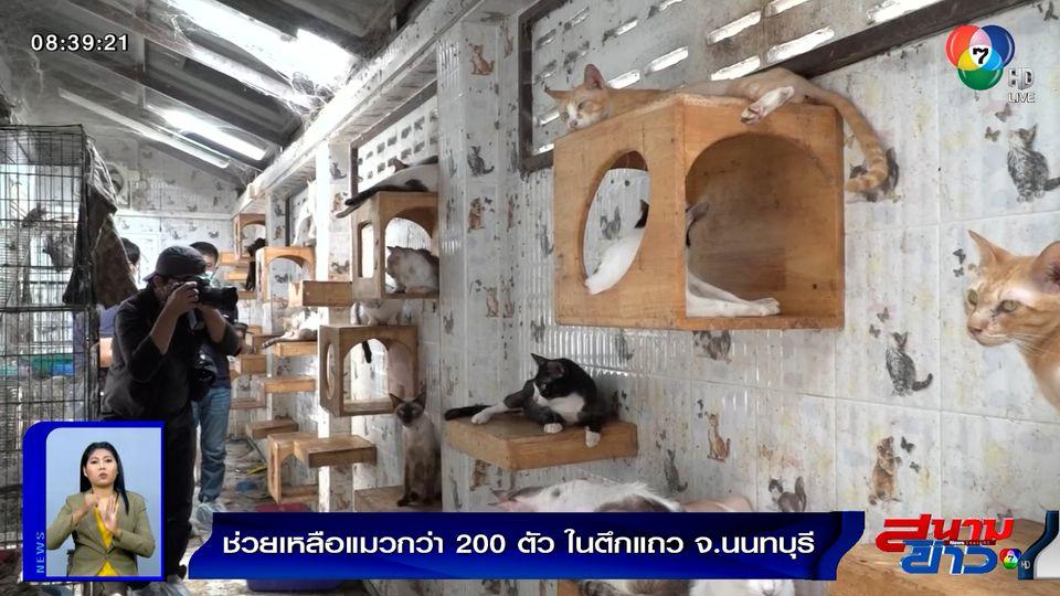 รายงานพิเศษ : ช่วยเหลือแมวกว่า 200 ตัว ในตึกแถว จ.นนทบุรี