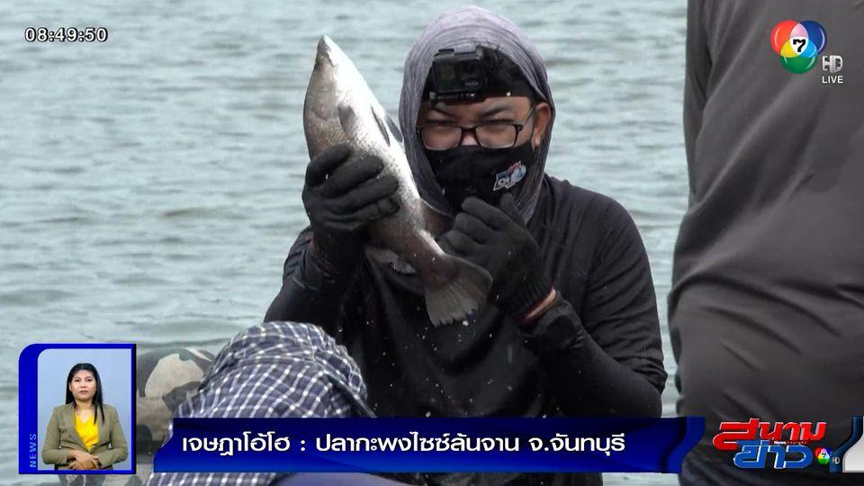 เจษฎาโอ้โฮ : ปลากะพงไซซ์ล้นจาน จ.จันทบุรี
