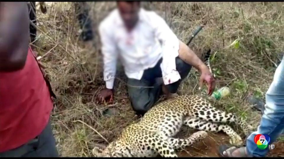ระทึก! ชายอินเดียฆ่าเสือด้วยมือเปล่า ปกป้องครอบครัว