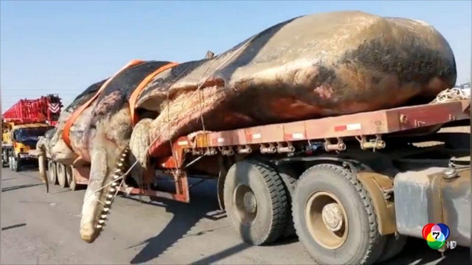พบซากวาฬลอยอยู่ในทะเลนอกชายฝั่งจีน