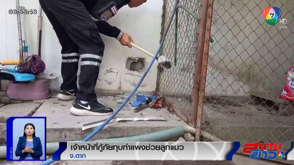 ภาพเป็นข่าว : กู้ภัยทุบกำแพงช่วยลูกแมว