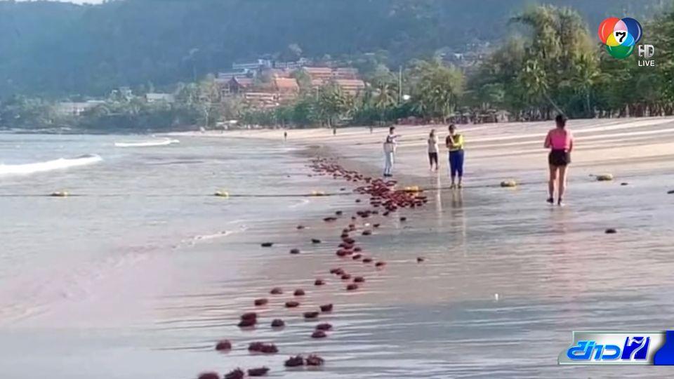 เม่นทะเลแดงลอยเกลื่อนหาดป่าตอง จนท.เก็บตัวอย่างน้ำหาสาเหตุ