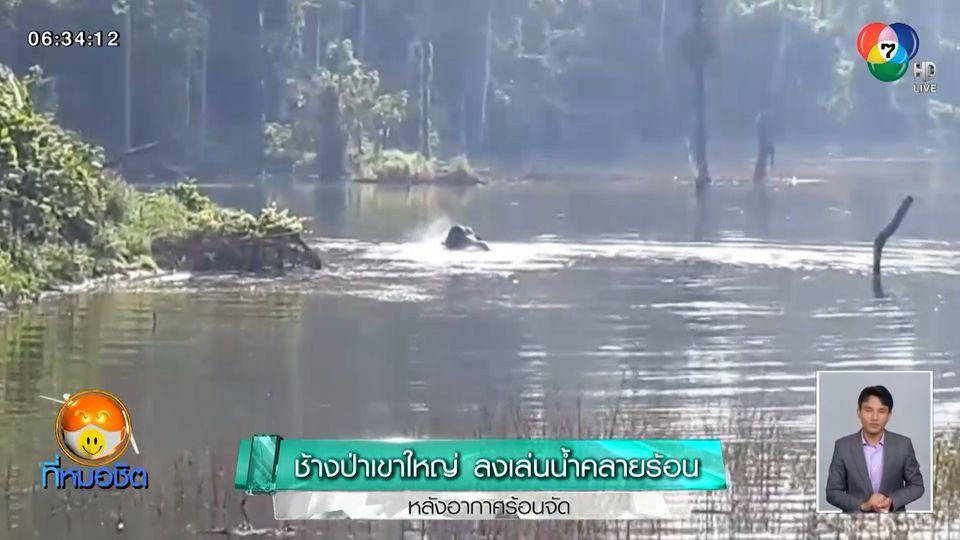 ช้างป่าเขาใหญ่ ลงเล่นน้ำคลายร้อน หลังอากาศร้อนจัด