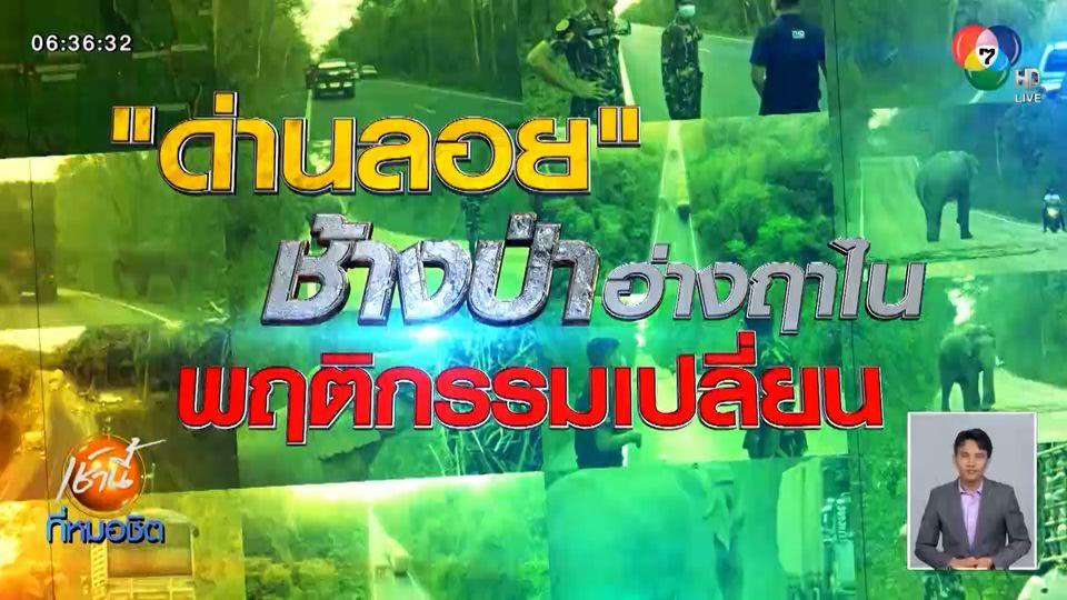 Green Report : ด่านลอย ช้างป่าอ่างฤาไนพฤติกรรมเปลี่ยน