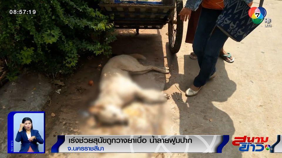 ภาพเป็นข่าว : สุนัขถูกวางยาเบื่อ น้ำลายฟูมปาก ชาวบ้านพยายามช่วย แต่ไม่รอด