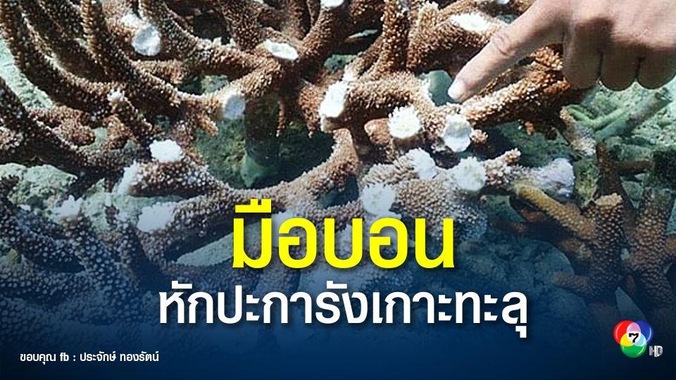 กรมอุทยานฯ แจ้งความหาตัวคนหักปะการังเขากวางเกาะทะลุ แตกหักเสียหายจำนวนมาก