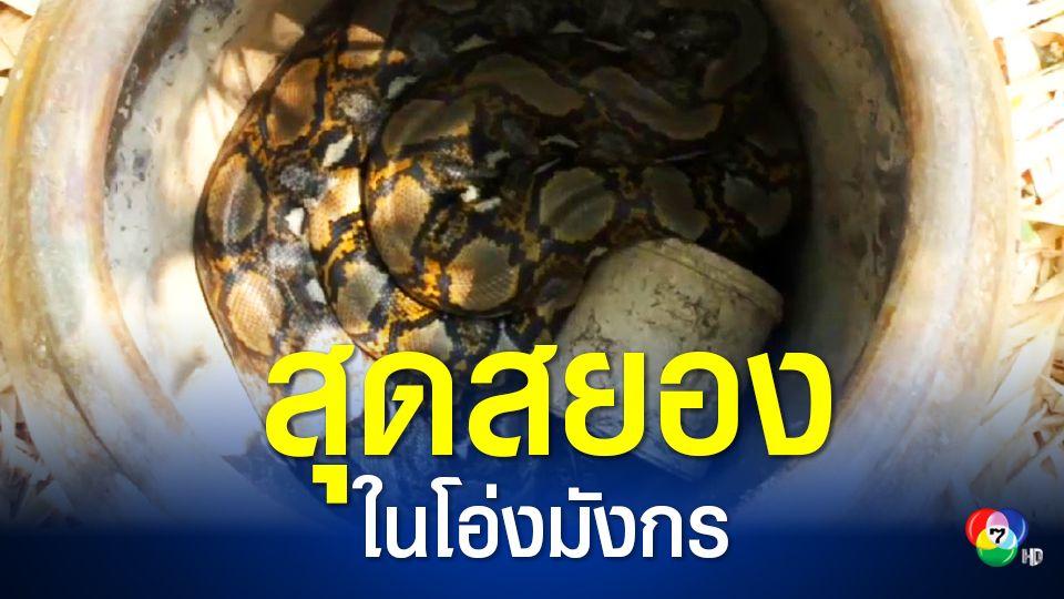 สุดสยอง! งูเหลือมหนุ่มสาว 2 ตัว หลบร้อนลงไปผสมพันธุ์ในโอ่งมังกร